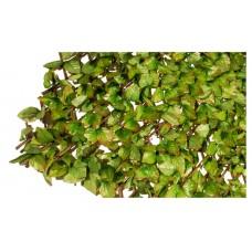 Τεχνητές Πτυσσόμενες Φυλλωσιές Δίχρωμου Αναρριχώμενου Φυτού 100x200cm   kipogeorgiki.gr