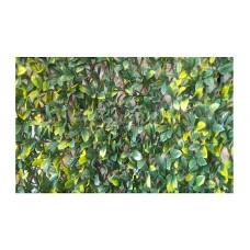 Συνθετικές Δίχρωμες Φυλλωσιές Σεφλέρα Επεκτεινόμενη σε Ξύλινο Πλέγμα 100x300cm | kipogeorgiki.gr