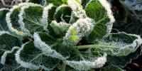 Προστασία των Φυτών από τον Παγετό