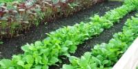 Μηνιαίος Λαχανοκομικός Οδηγός Σποράς & Φύτευσης - Δεκέμβριος