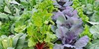 Μηνιαίος Λαχανοκομικός Οδηγός Σποράς & Φύτευσης - Φεβρουάριος