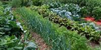 Μηνιαίος Λαχανοκομικός Οδηγός Σποράς & Φύτευσης - Μάρτιος