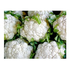 Κουνουπίδι Snowball Erfurter Σπόροι (Brassica oleracea var. botrytis)    |kipogeorgiki.gr
