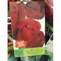 Τριανταφυλλιές Δενδρώδεις, Θαμνώδεις, Πολύανθες, Αναρριχώμενες , Έρπουσες