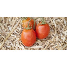 Ντομάτα αυγουλάτη Κρήτης βιολογική|kipogeorgiki.gr