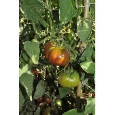 Ντομάτα μαύρη βιολογική|kipogeorgiki.gr