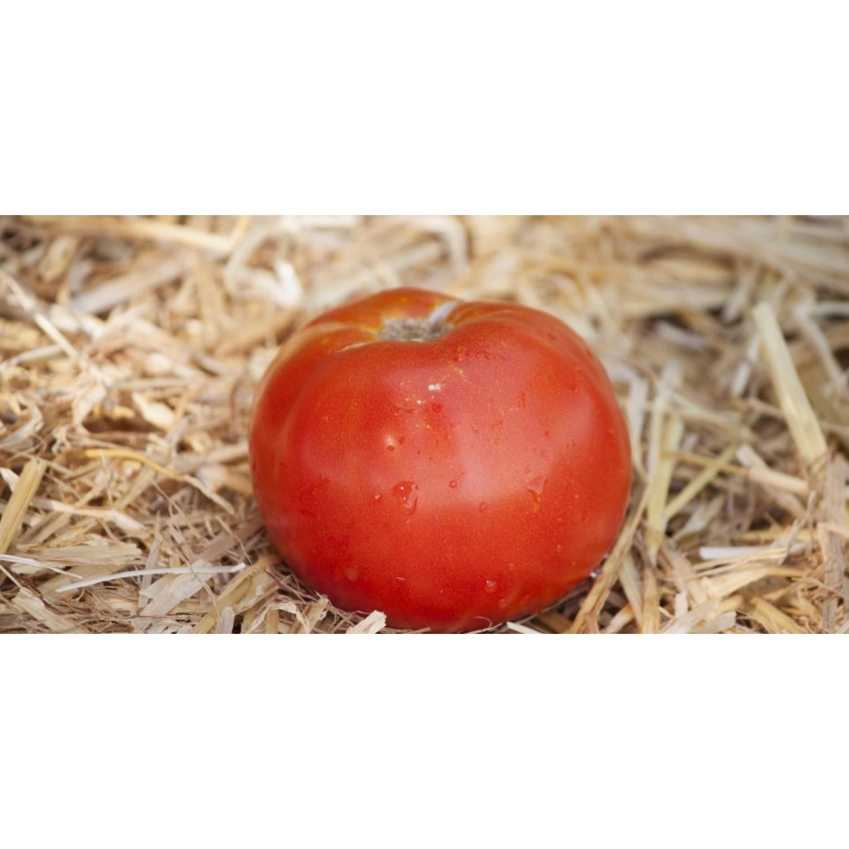 Ντομάτα Χαλκιδικής βιολογική|kipogeorgiki.gr