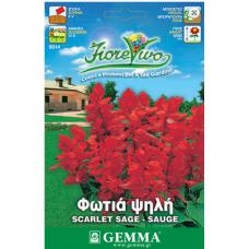 Φωτιά ψηλή σπόροι|kipogeorgiki.gr