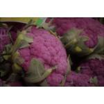 Κουνουπίδι Μωβ Sicily Purple Σπόροι (Brassica oleracea var. botrytis) | kipogeorgiki.gr