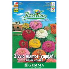 Ζίνια λίλιποτ σπόροι|kipogeorgiki.gr