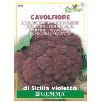 Κουνουπίδι Μωβ Sicily Purple