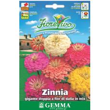 Ζίνια νταλια γίγας σπόροι|kipogeorgiki.gr