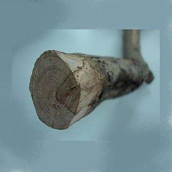 Ευτυπίωση (Eutypa lata)